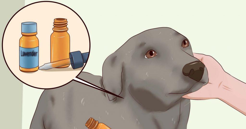 démangeaisons chien
