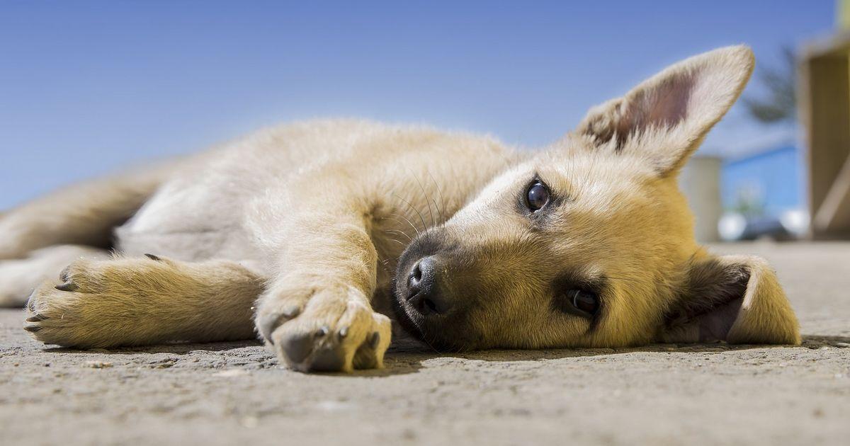 Apprendre chien renoncer