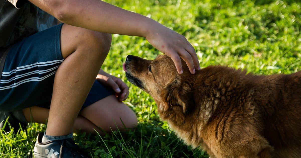 Automutilation chien