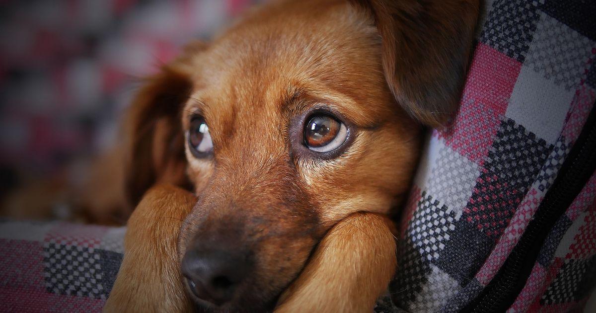 chien aime pas caresses