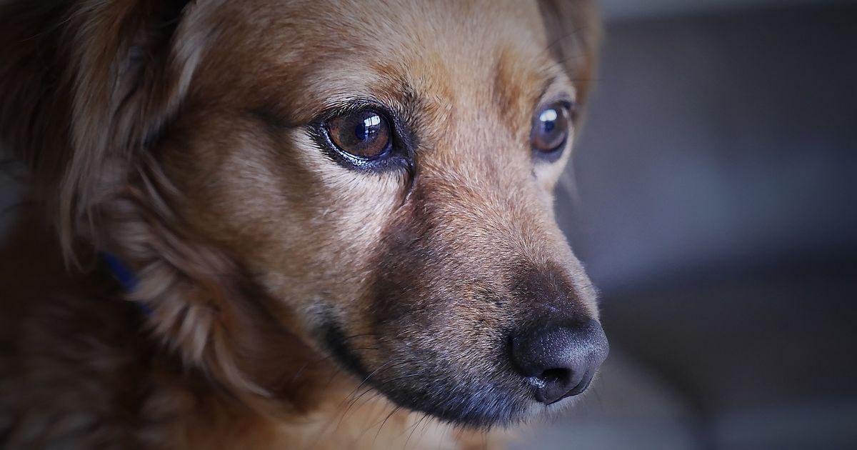 chien peur ascenseur