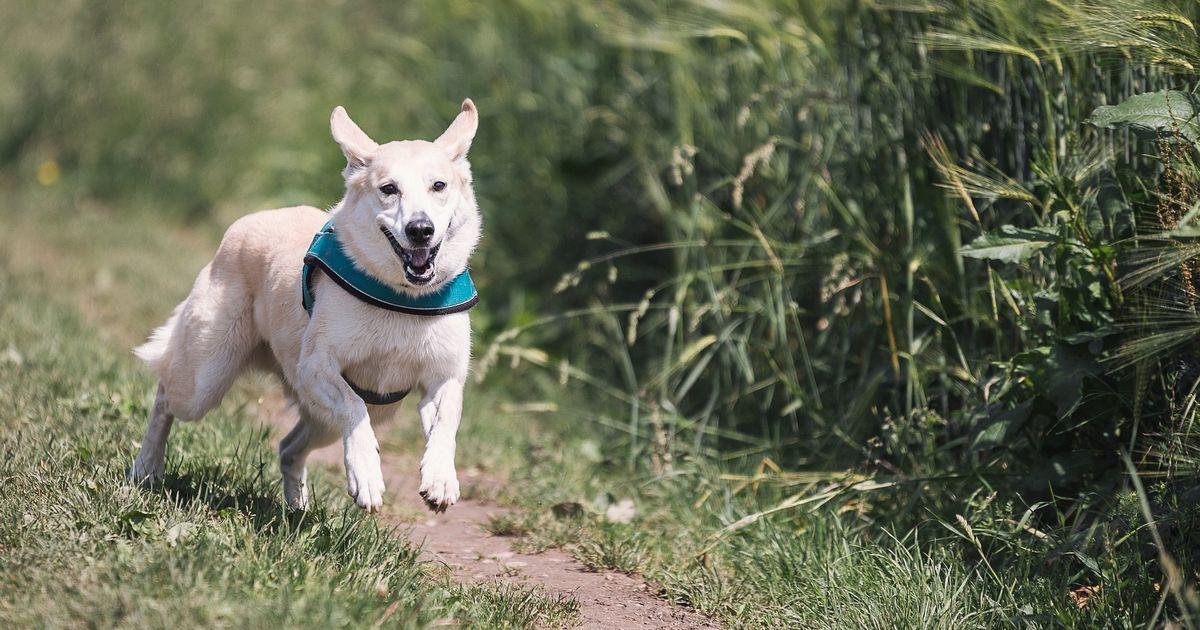 chien refuse courir avec moi