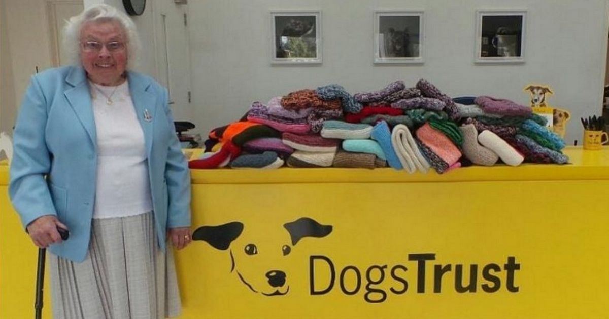 femme tricoté couvertures chiens errants