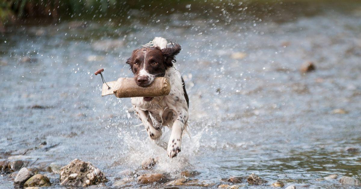 Laisser votre chien courir directement dans l'eau