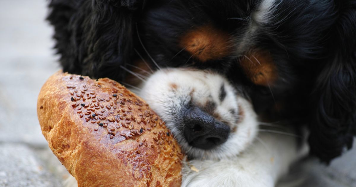 aime manger chien