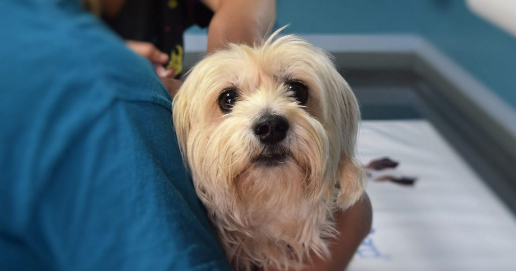 assurance remboursement vétérinaires