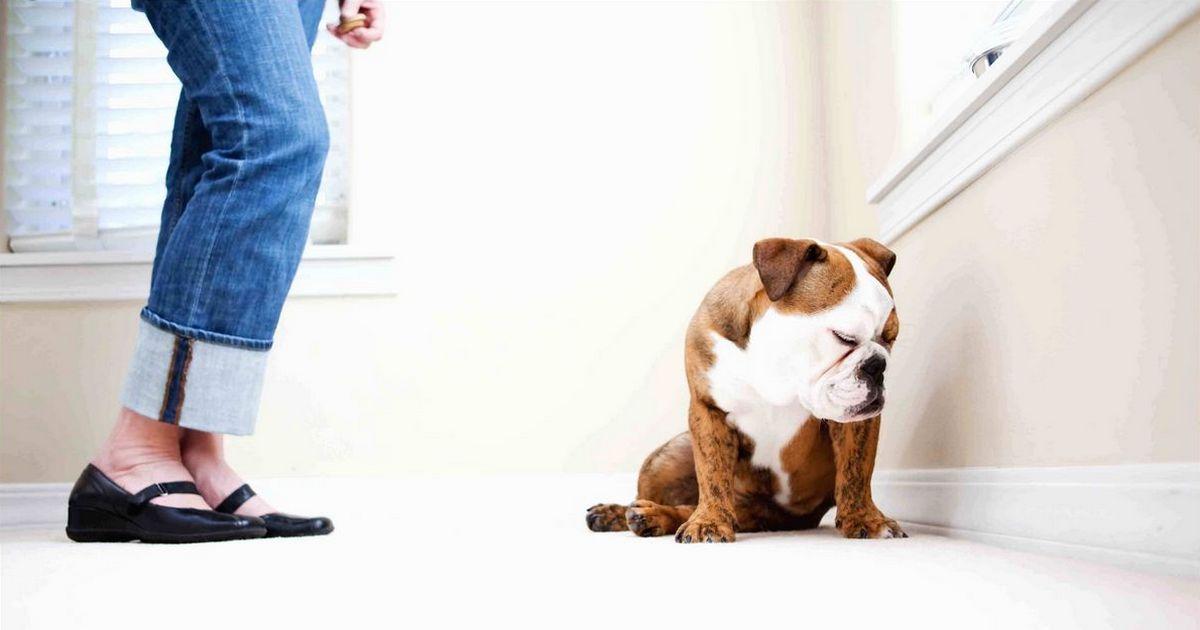 Hurler sur ton chien