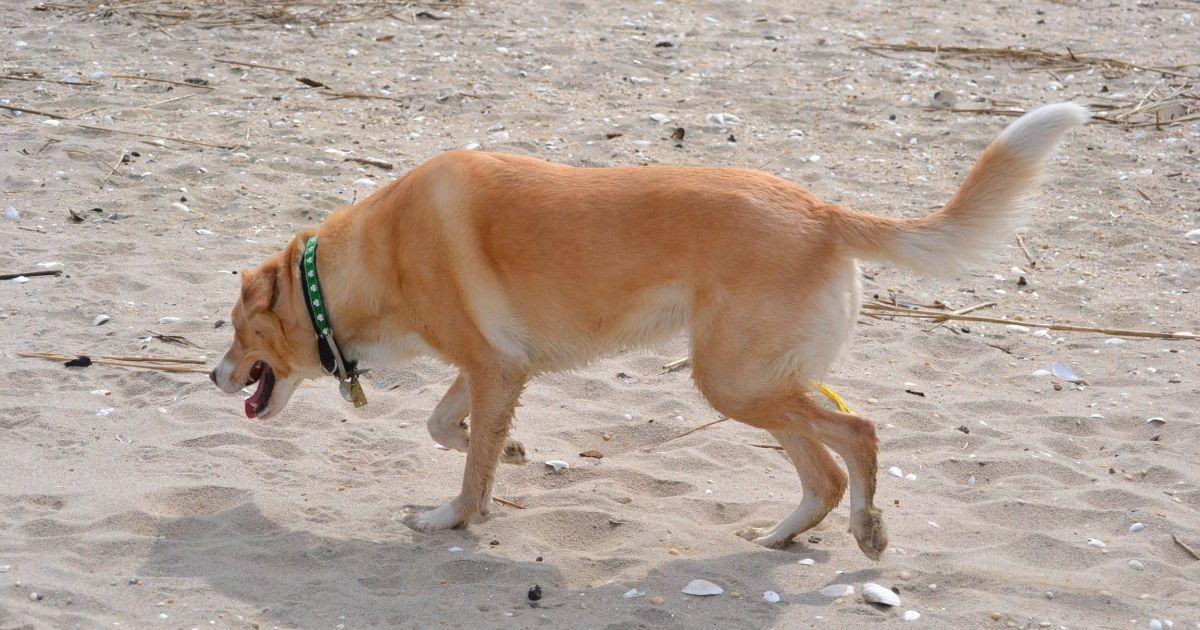 Marcher sur le goudron ou le sable