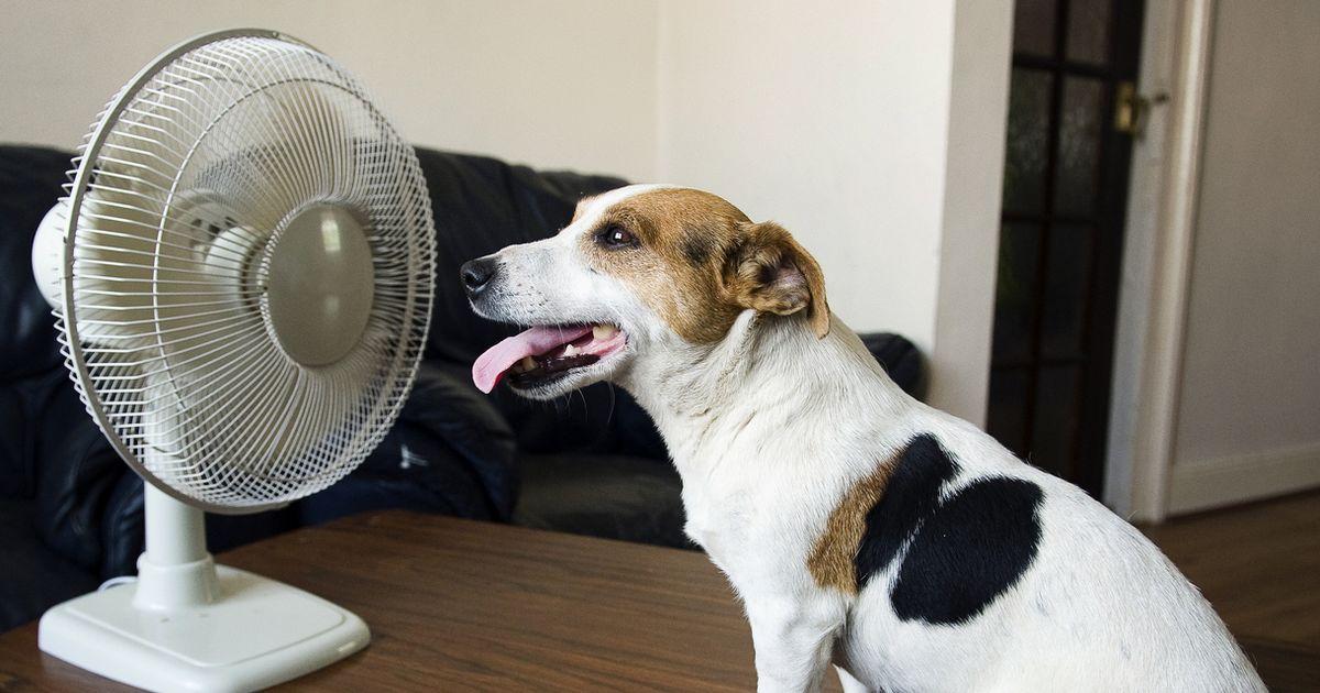 Ne pas mettre de l'air pour lutter contre la chaleur