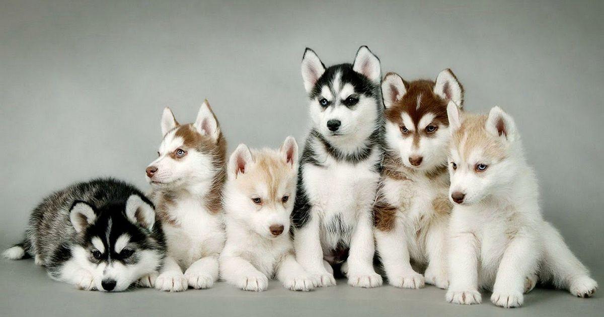 Ne pas tenir compte des spécificités de la race de ton chien