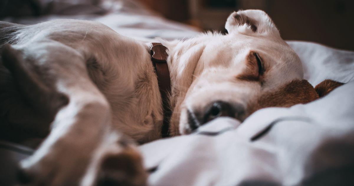 Dormir avec chien