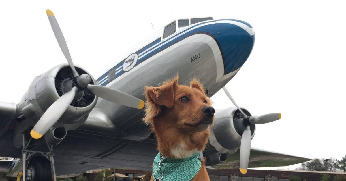 voyager chien avion