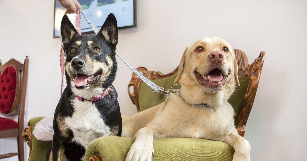 Accueillir deuxième chien