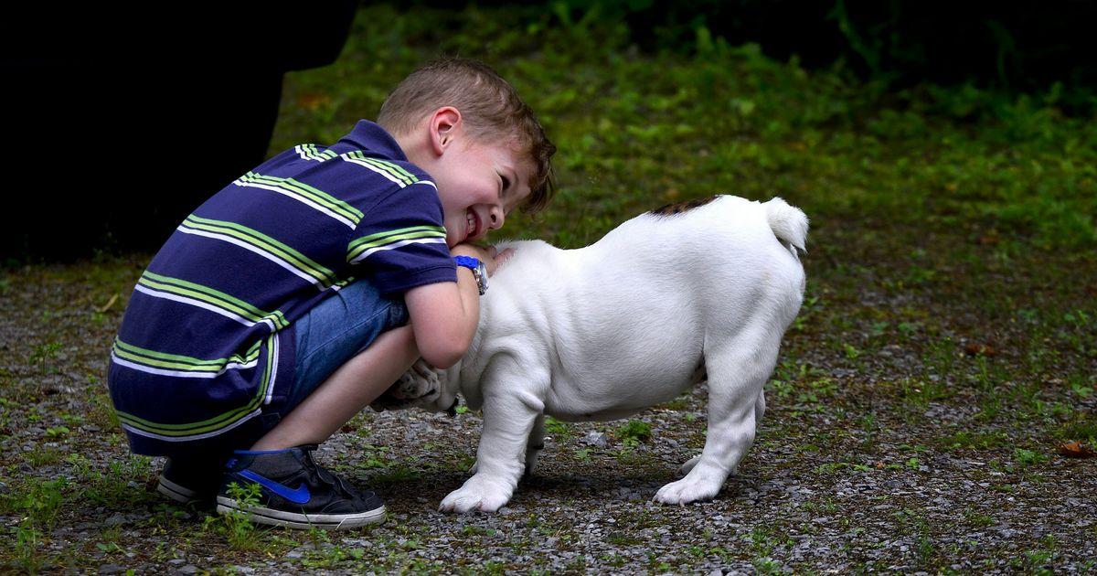 Adopter chien enfant