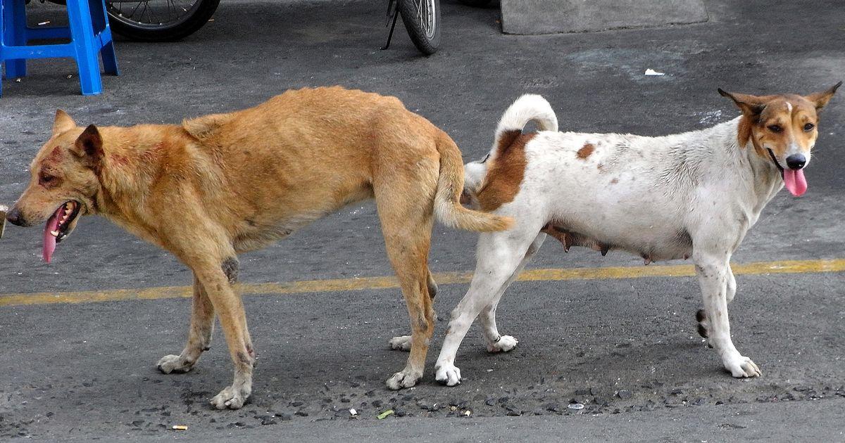 accouplement chien