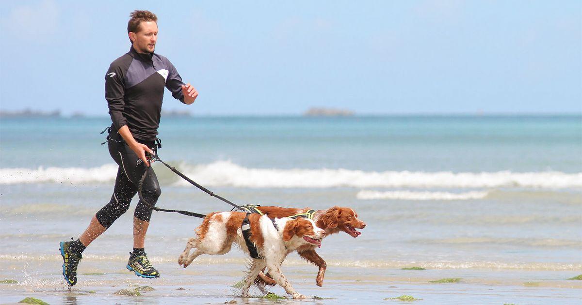 apprendre à bien courir avec son chien