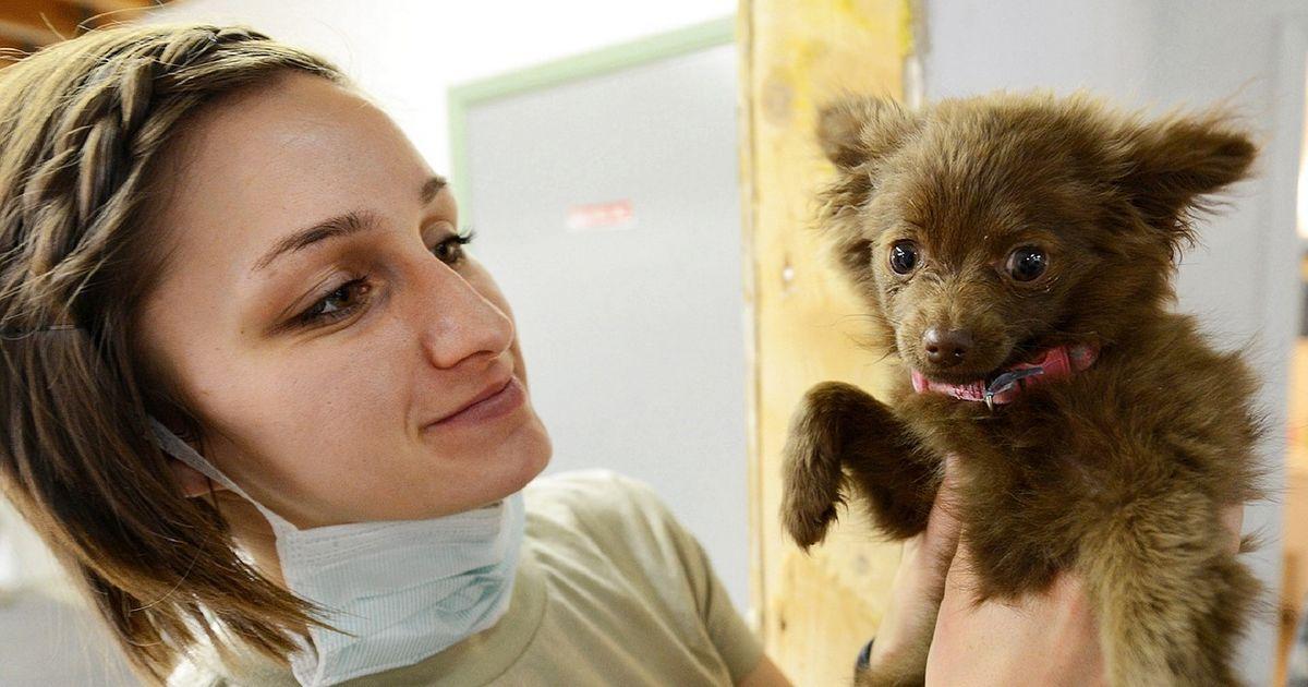 première visite chiot vétérinaire