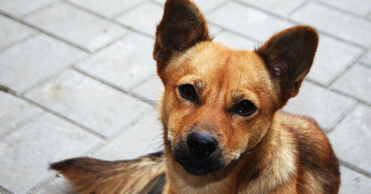 Assurance chien 9 ans