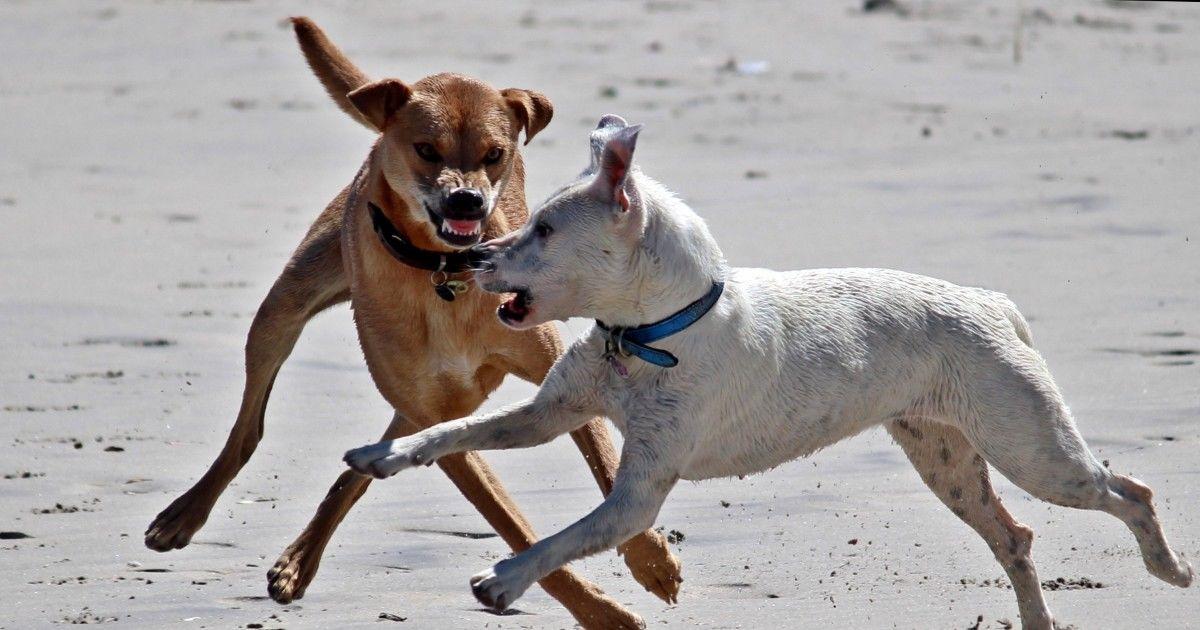 Assurance chien dangereux
