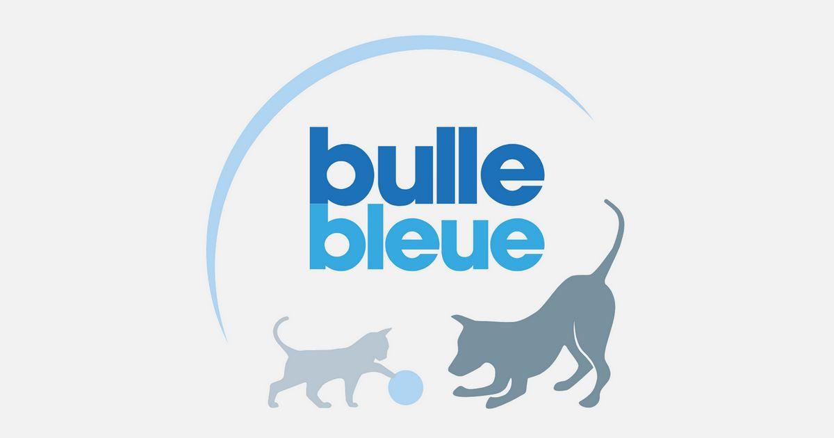 Bulle Bleue assurance chien