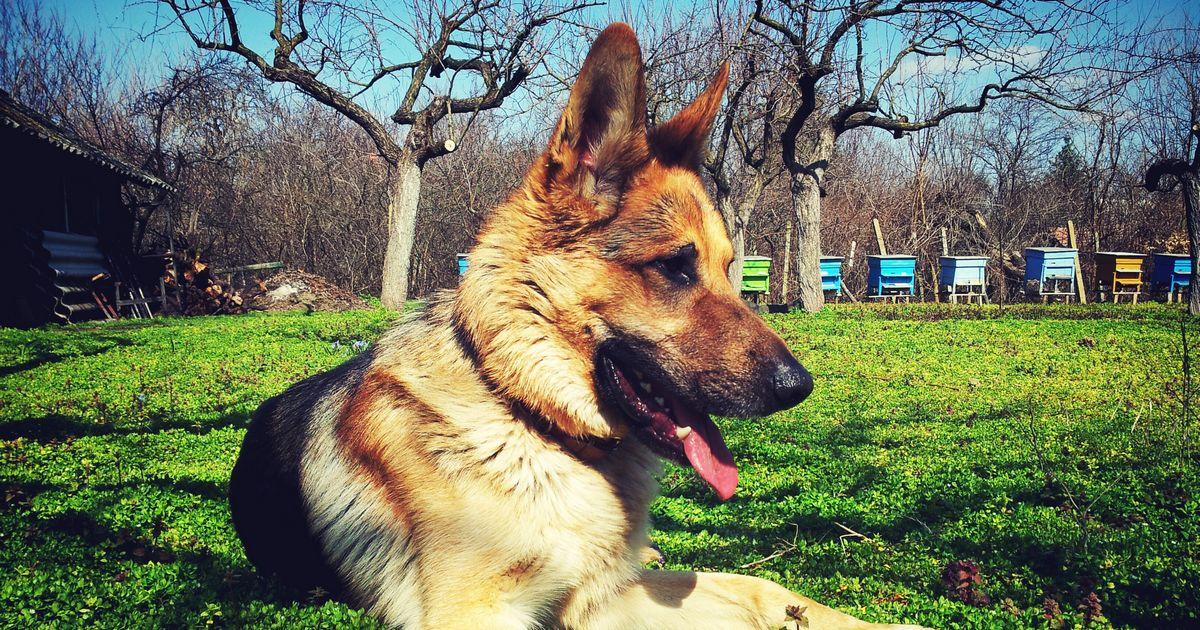 Mutuelle chien sans frais