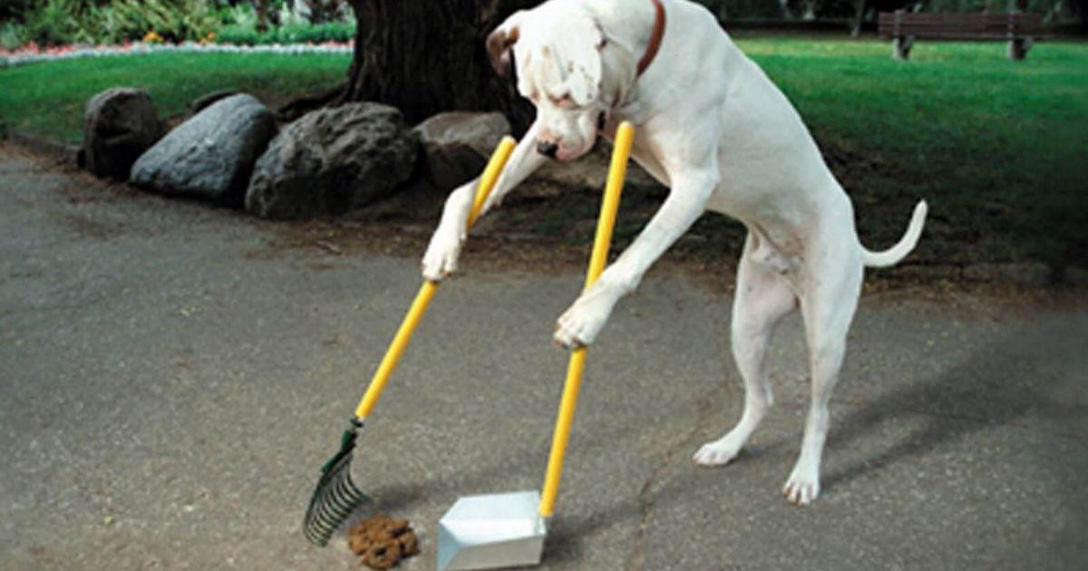 chiens intelligents